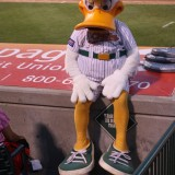ven Long Island Ducks mascot, QuackerJack, needs a rest, occasionally. This was during a game Tuesday, July 24, 2012 at Bethpage Ballpark in Central Islip. Photo by Joshua Odam