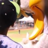 Long Island Ducks mascot QuackerJack gives a fan an autograph. (July 24, 2012) Photo by Joshua Odam