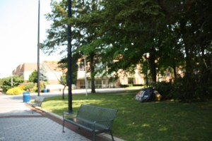 A glimpse of the campus.